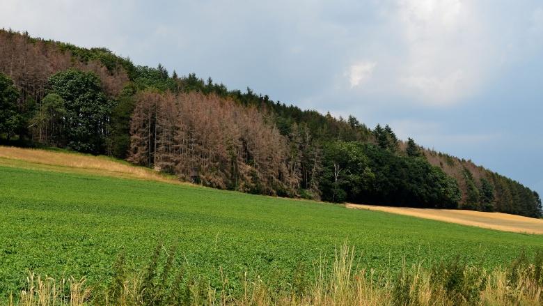 Zukunftssichere und klimastabile Wälder für NRW